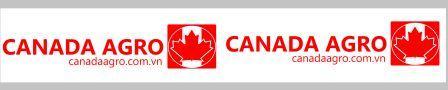 Xu hướng băng dính in logo